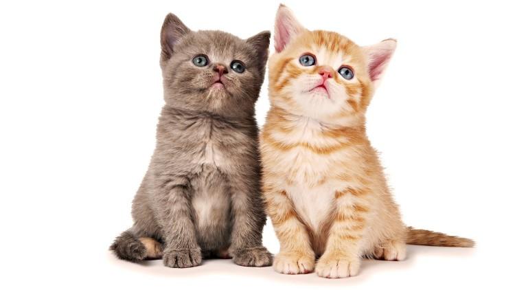 Małe kotki wymagają szczególnej troski i dobrej karmy dla juniorów