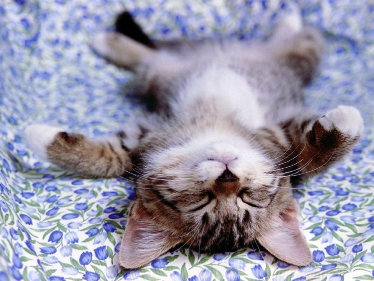 Małe kotki to potencjalne leniuchy lub przyszłe łobuzy