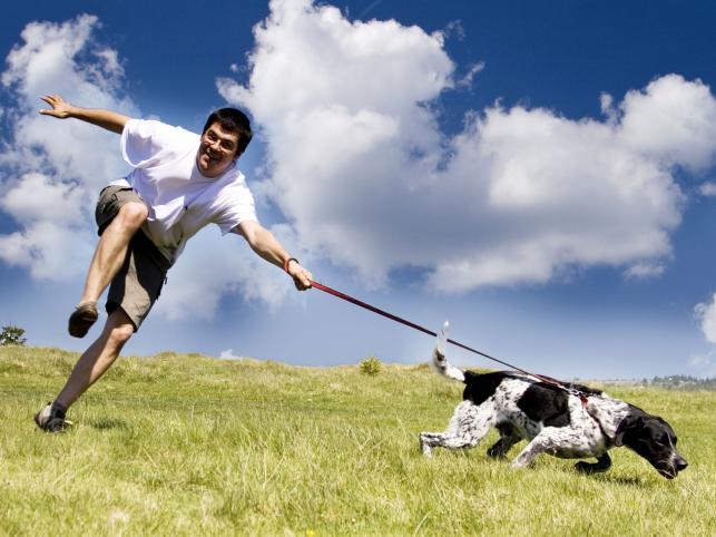 Energiczny spacer to podstawowa aktywność dla psa