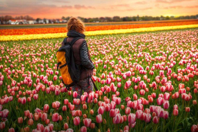 Holandia to niewielki kraj, w którym jednak stosunkowo łatwo znaleźć pracę, zwłaszcza jeśli posiadamy dodatkowe uprawnienia i znamy język
