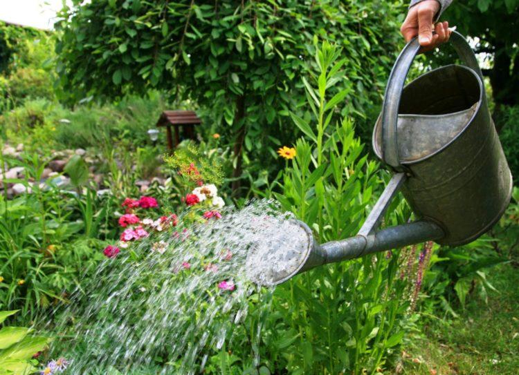 Podlewanie roślin podczas upału powinno odbywać się według ściśle określonych zasad, które pozwolą na skuteczne ich nawodnienie