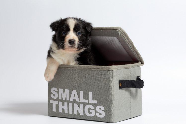 Gadżety dla szczeniąt mogą nam pomóc w wychowaniu psiaka, np. w treningu czystości