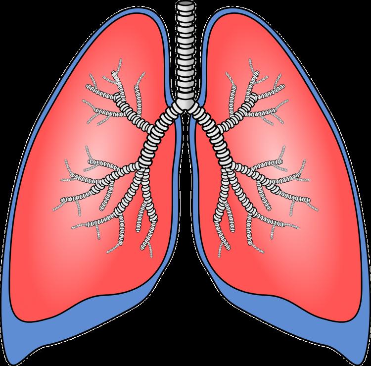 Górne drogi oddechowe często padają ofiarą wirusów, które powodują kaszel i problemy z odkrztuszniem