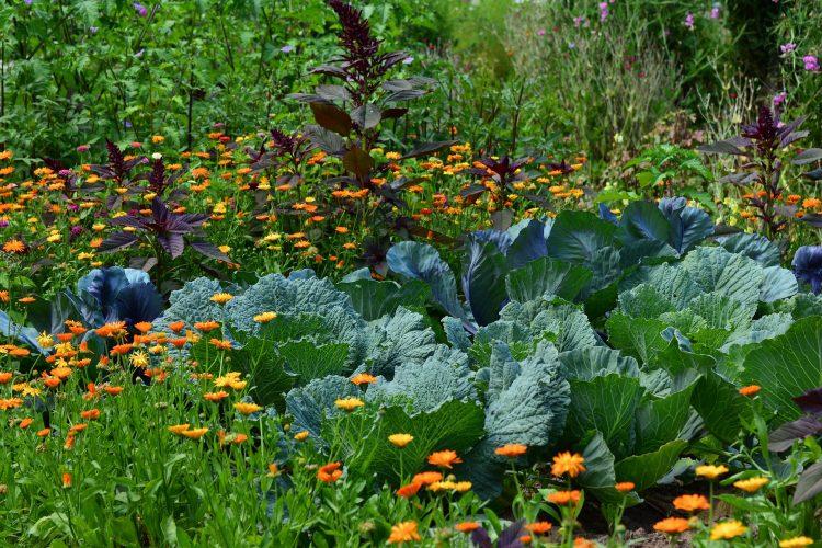 Stosowanie płodozmianu pozwala na zachowanie gleby w dobrej kondycji i żywotności